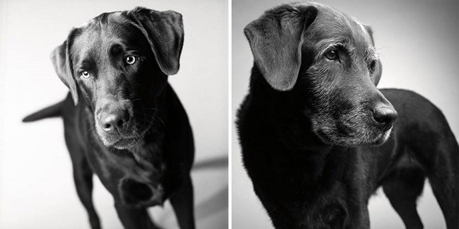 Growing-Up-With-Dogs-8