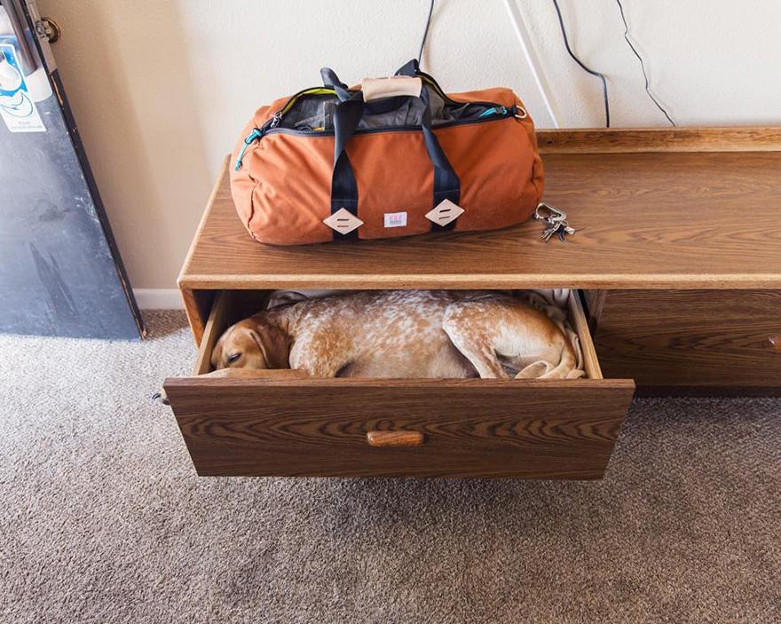 Sleeping-Dogs-15