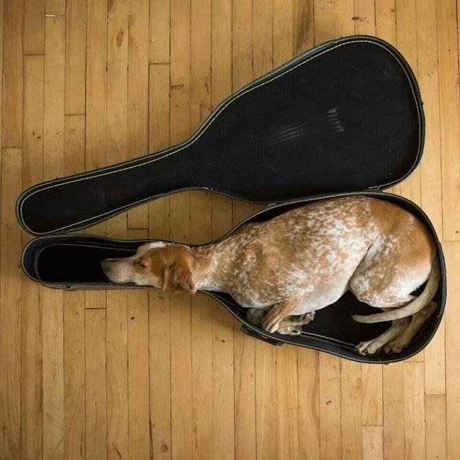 Sleeping-Dogs-3