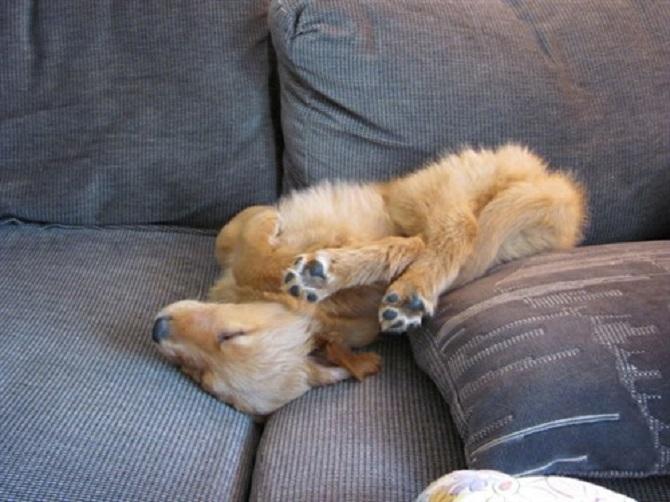 Sleeping-Dogs-7