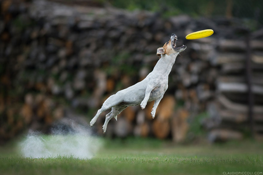 dogs-can-fly-15__880