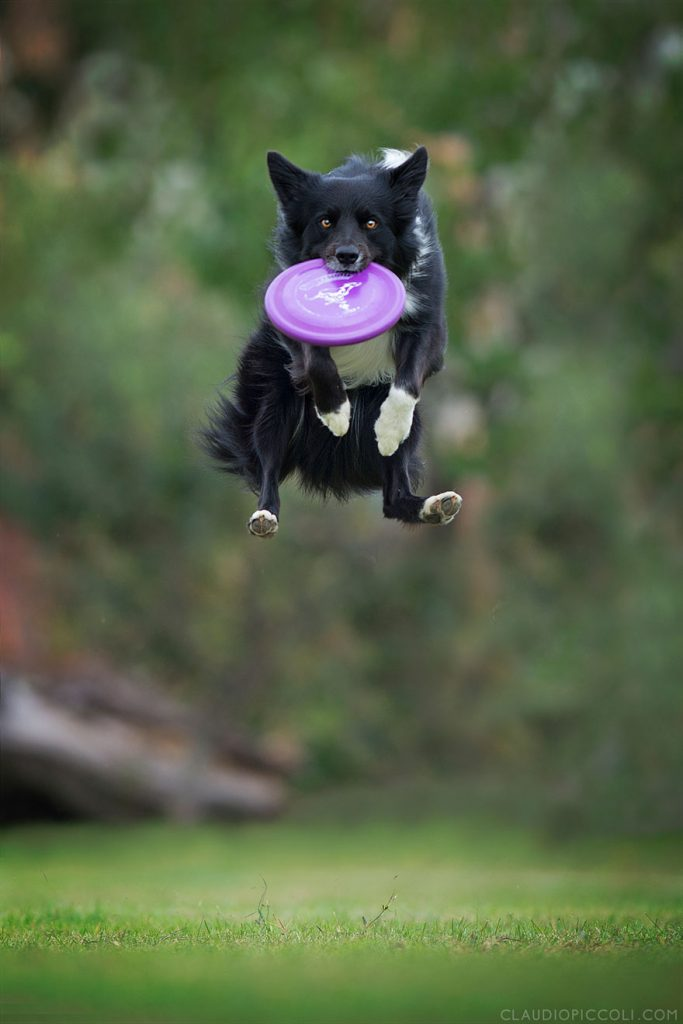 dogs-can-fly-3__880