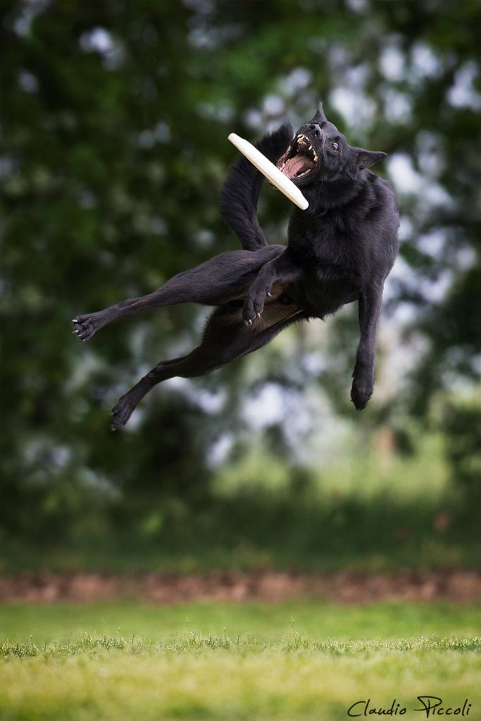 dogs-can-fly-4__880
