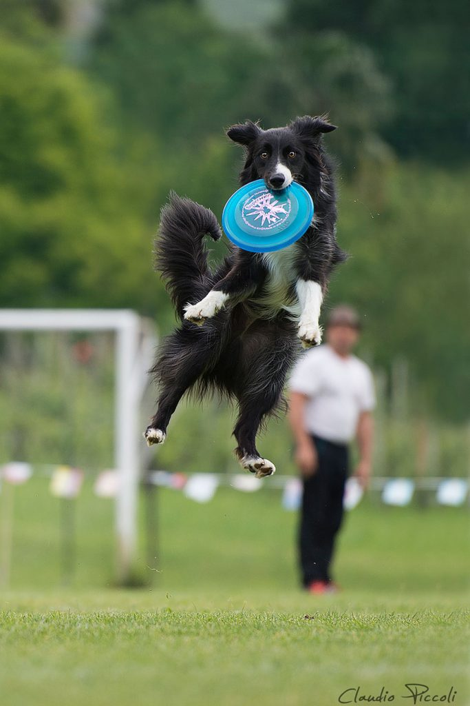 dogs-can-fly-5__880