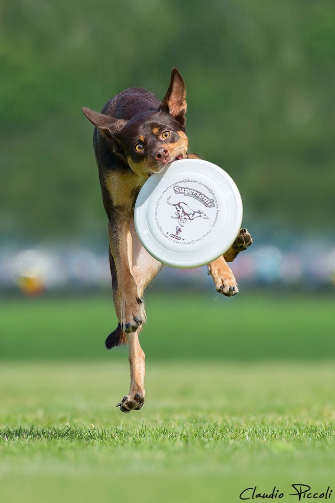 dogs-can-fly-8__880