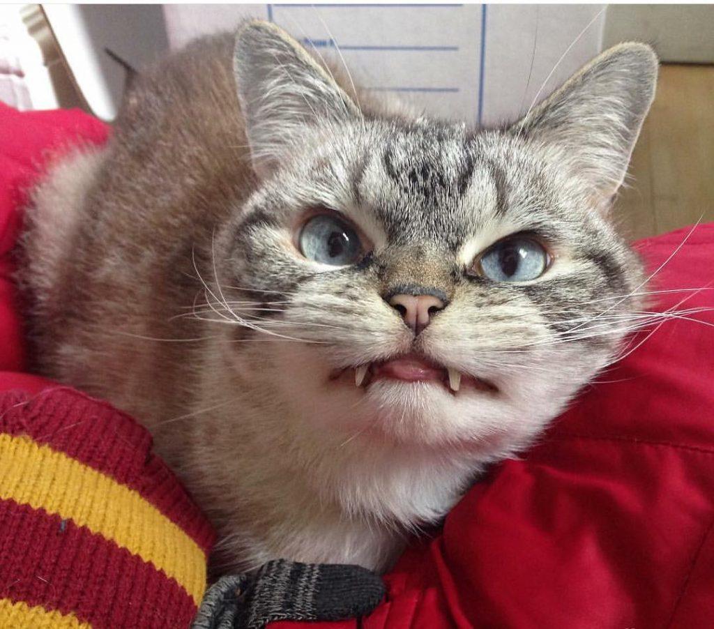 vampire-angry-cat-loki-29