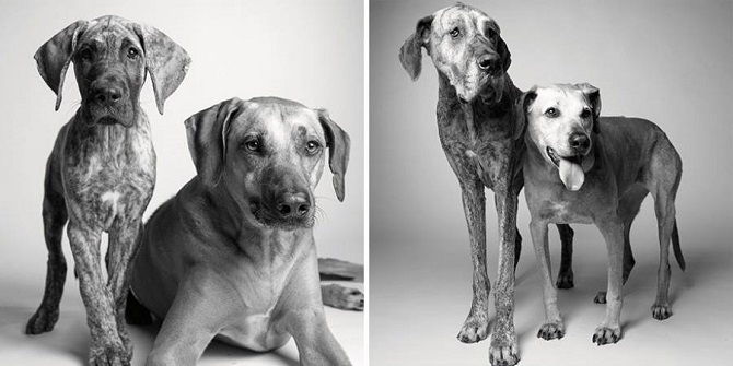 Growing-Up-With-Dogs-1