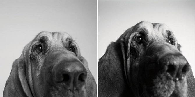Growing-Up-With-Dogs-2