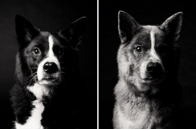 Growing-Up-With-Dogs-6