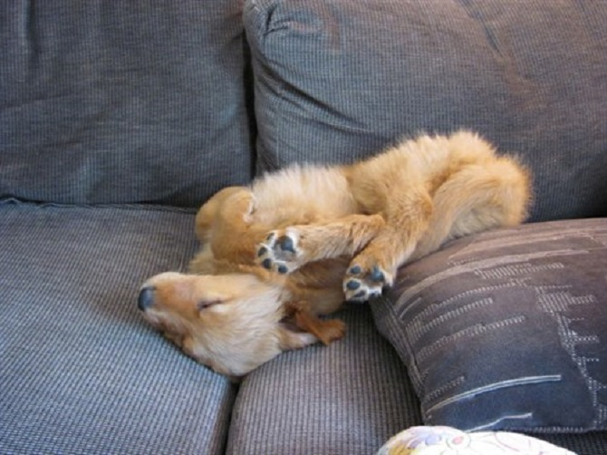Sleeping-Dogs-7