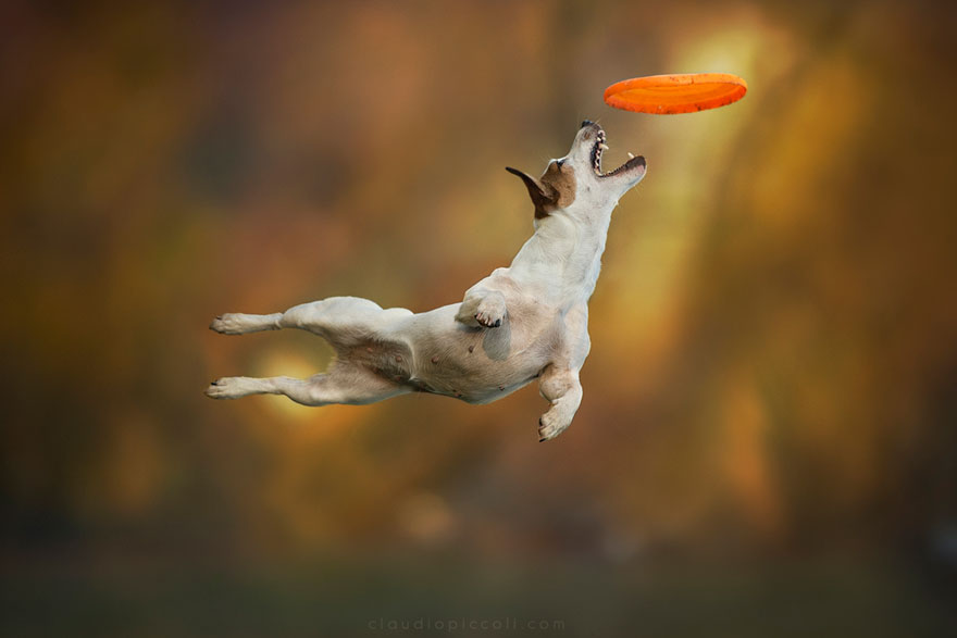 dogs-can-fly-10__880