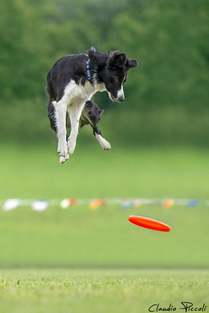 dogs-can-fly-18__880