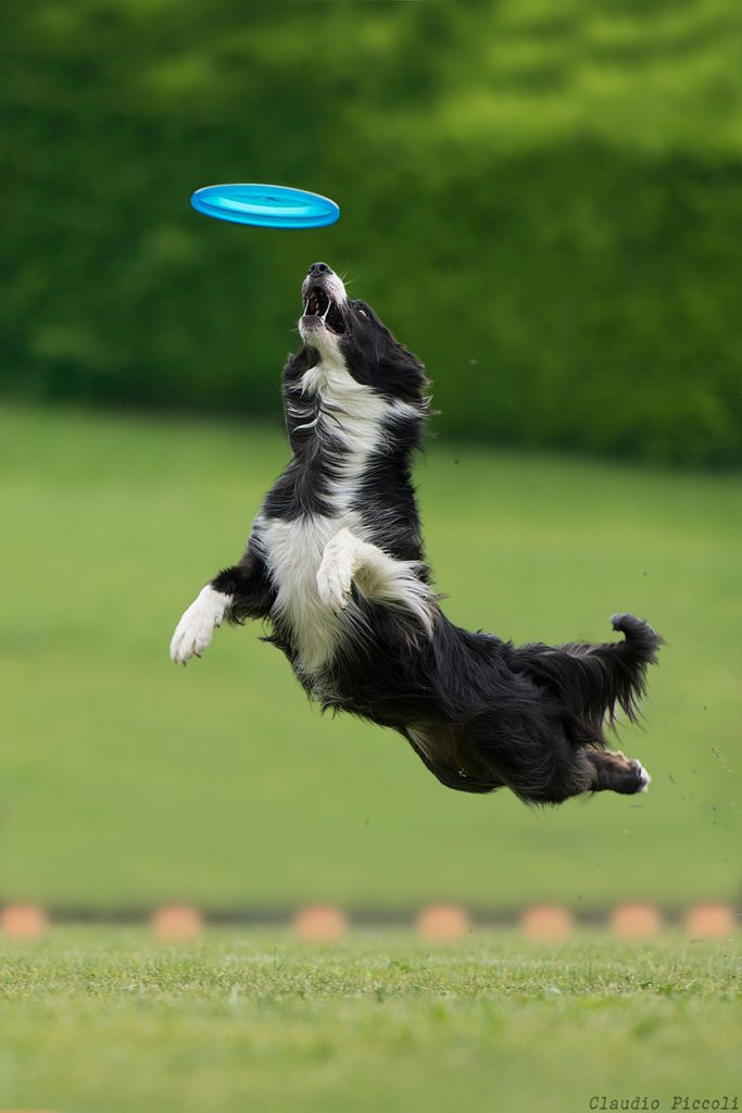 dogs-can-fly-19__880