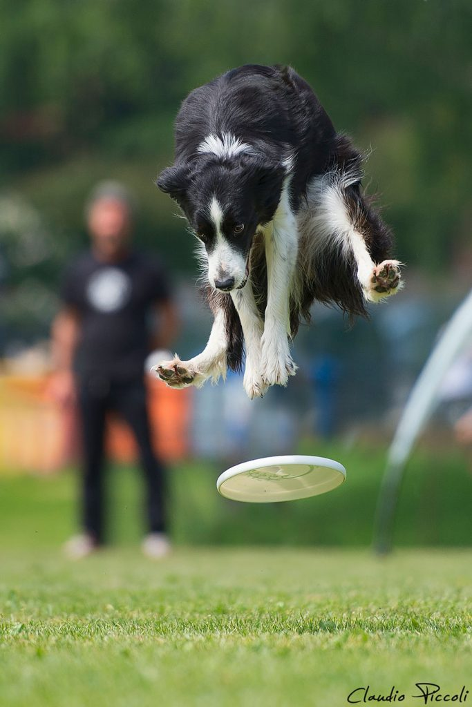 dogs-can-fly-21__880