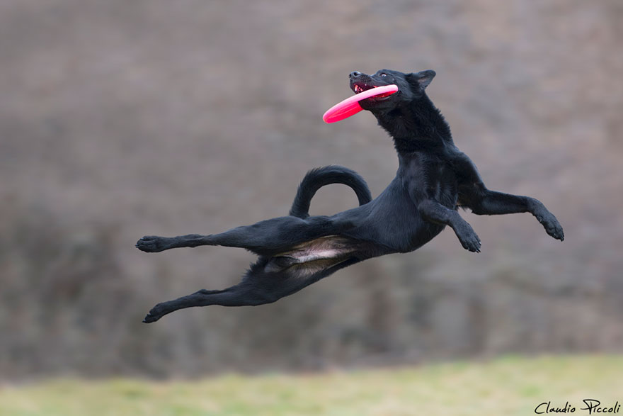 dogs-can-fly-22__880