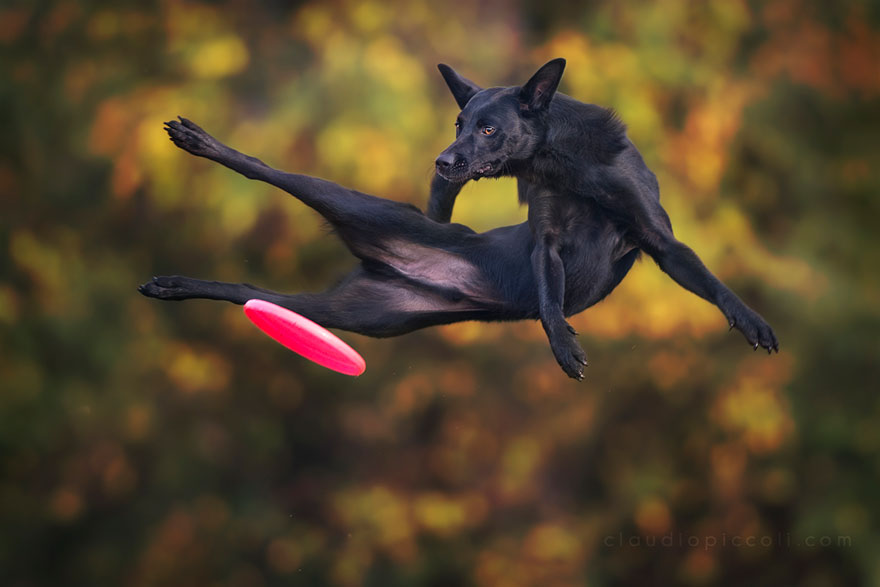 dogs-can-fly-23__880