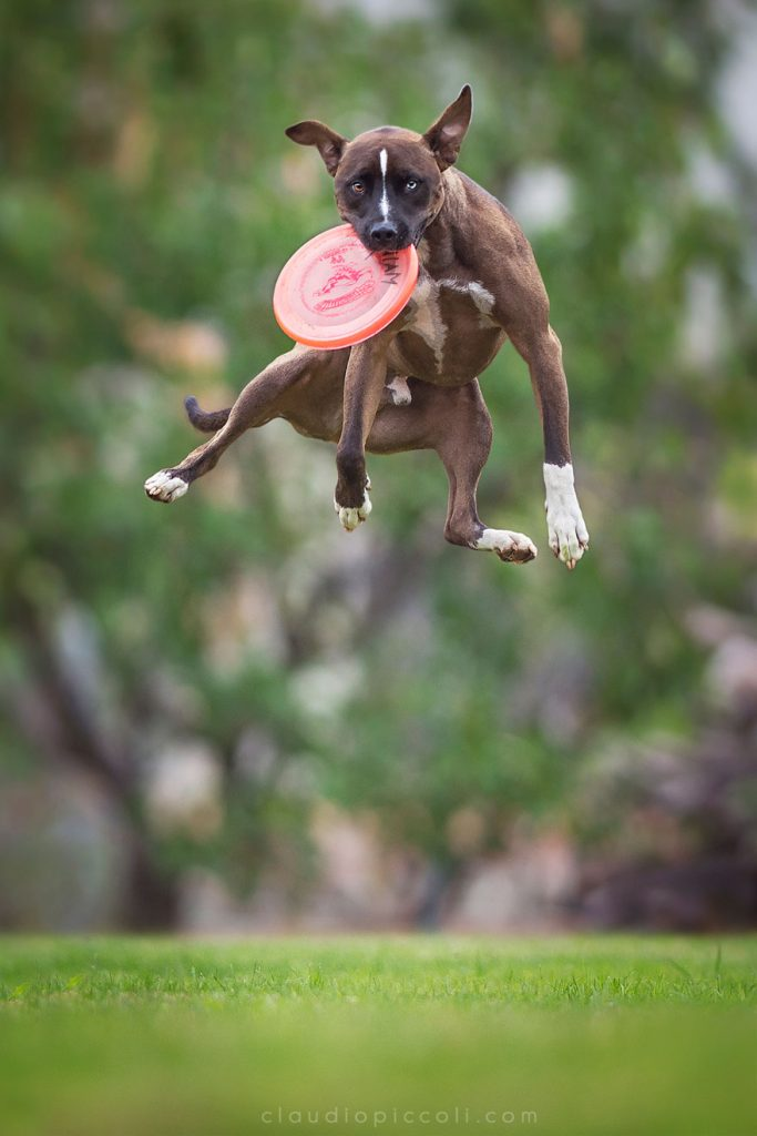 dogs-can-fly-26__880