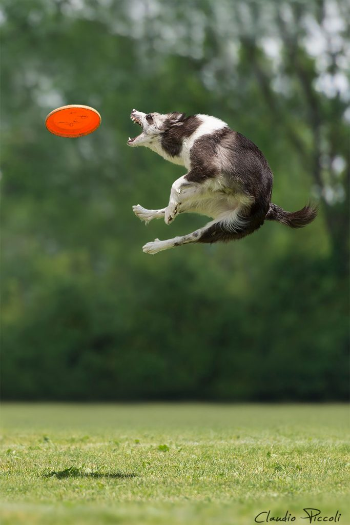 dogs-can-fly-6__880