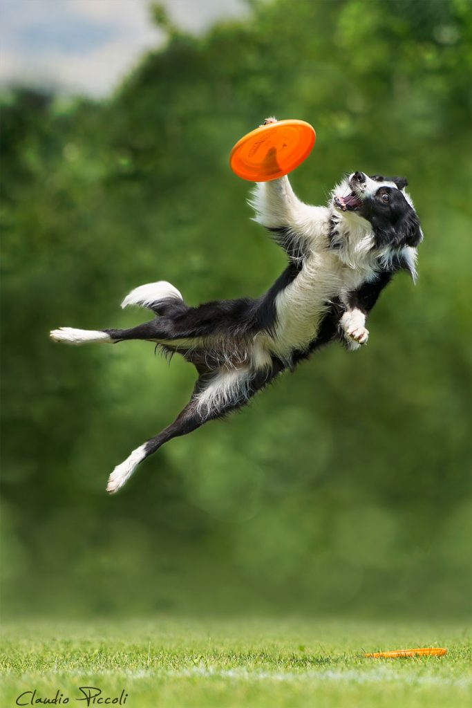 dogs-can-fly-9__880