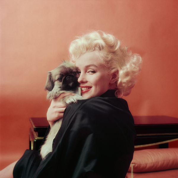 """Marilyn With a Pekingese"" (1955), сн. Милтън Грийн"