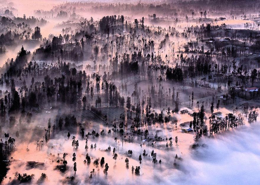 Мъгла и дървета в Индонезия